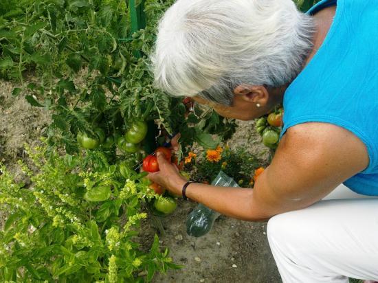 1ère tomate 11-08-13