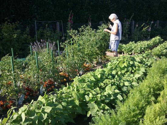 1ère tomate-22 Juillet 2011