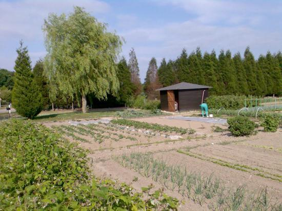 Potager 2008