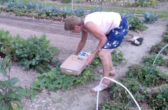 La récolte 2009