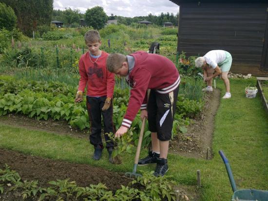 L'apprentissage des jardiniers... Juillet 2012