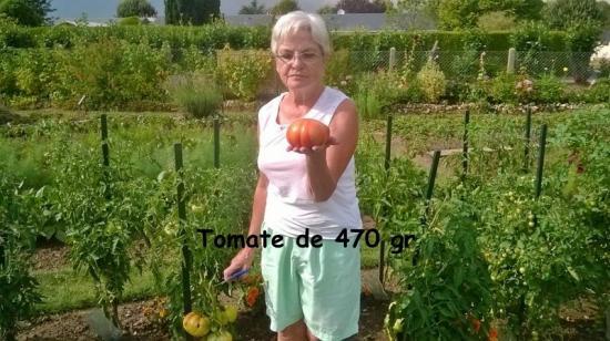 Tomate de 470 gr