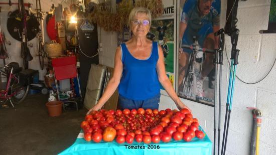 Une récolte de tomates en Septembre 2016