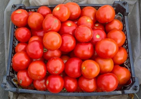 Septembre ... c'est toujours formidable  les tomates  !!!