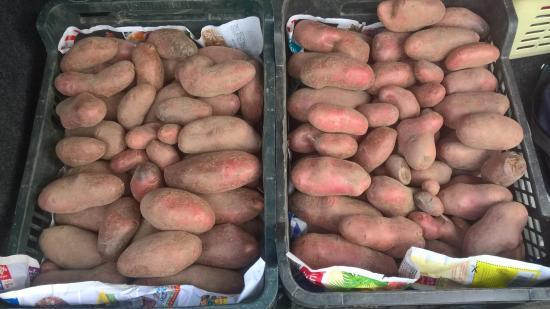 Récolte pommes de terre Juillet 2018 -1 caisse par rang