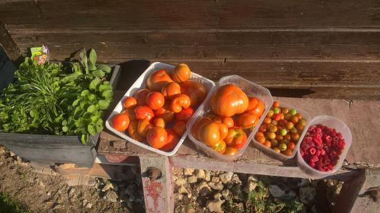 Une des récoltes du 29 Août 2019...Tomates et Framboises