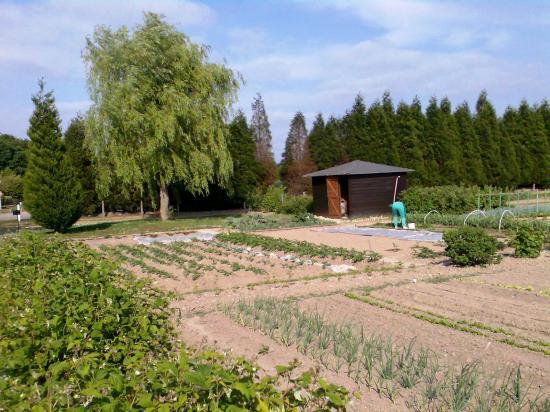 Photo du jardin avec anne marie